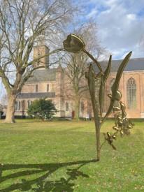 Grasveld Sint Baafs gouden tulp